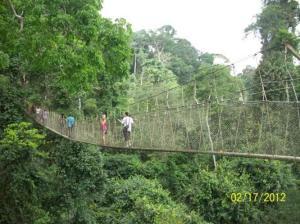 Walking the canopy walks in the Ghanaian rainforest.